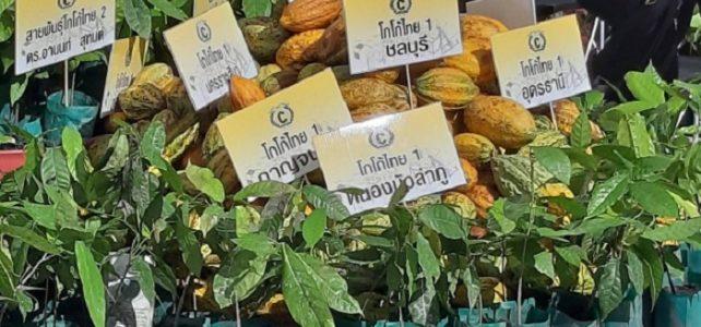 ติดตามเศรษฐกิจโลก โกโก้ พืชเศรษฐกิจตัวใหม่ที่น่าจับตามอง